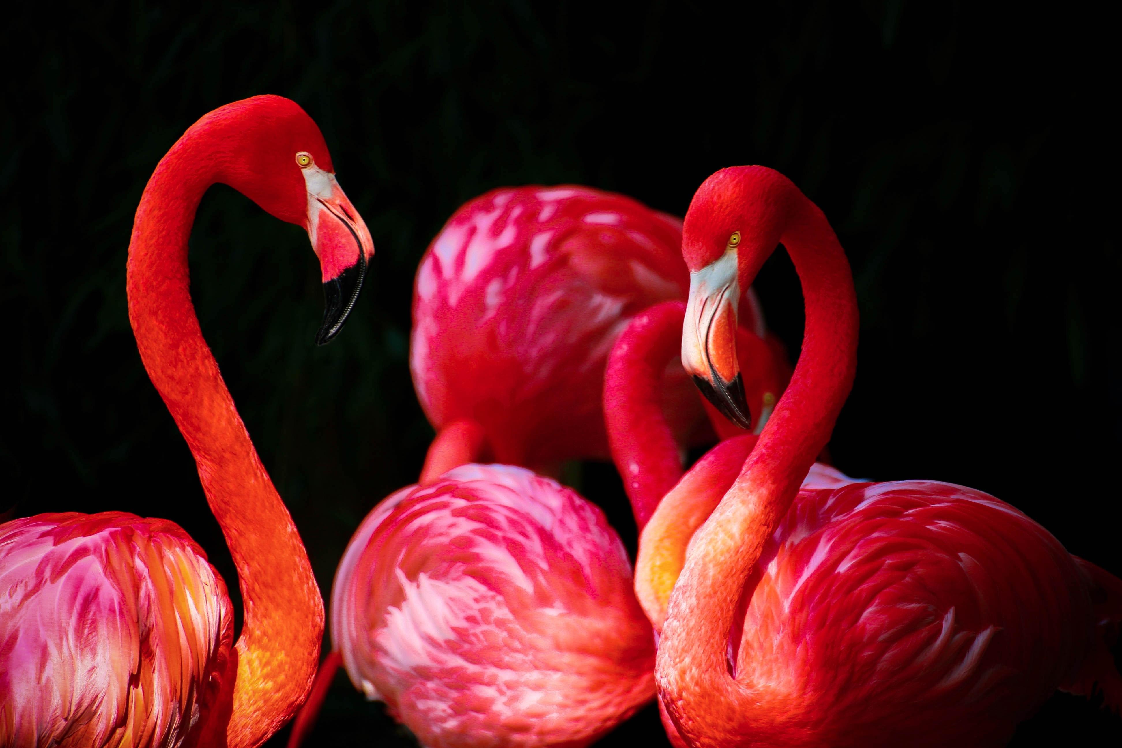 Curaçao Tech Meetups | Flamingos